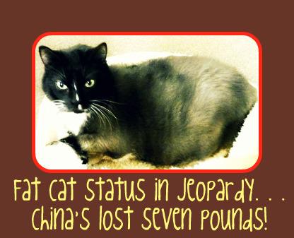 Chinafatcat