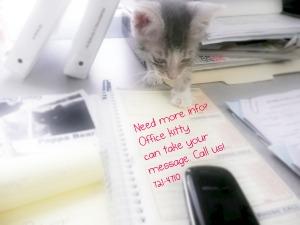 office kitty 1