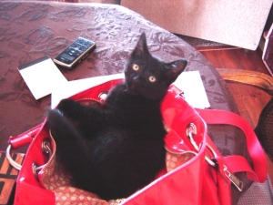 baby in my purse