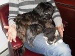 One Kitten Sleeps Next to Daisy. One Kitten Sleeps Under Her.