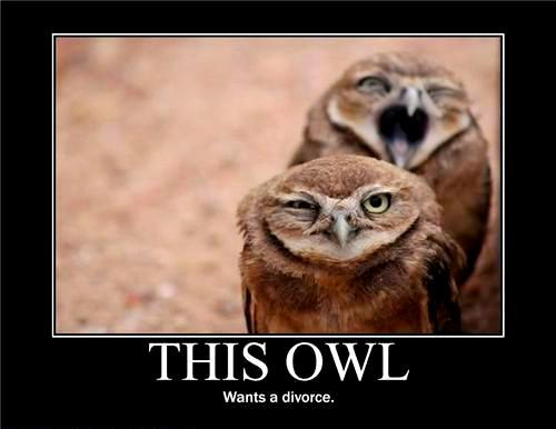 Demotivational posters this owl