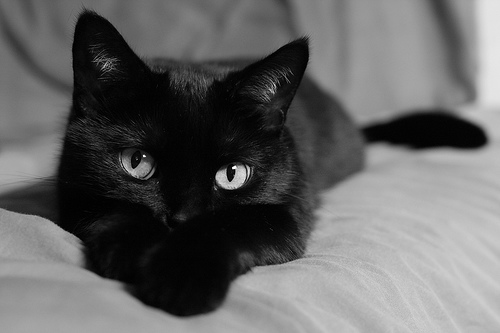 """""""October: Black Cat Month"""" (via about.com) – CHECK OUT OUR ..."""