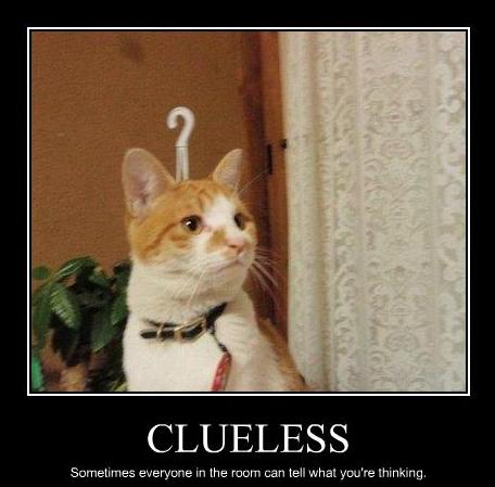 funny-pictures-cat-is-clueless