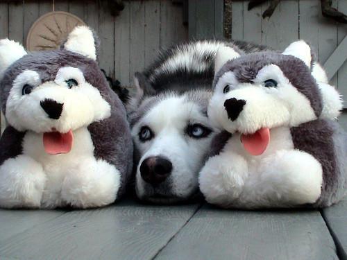 cute-dog-01