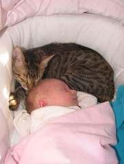 cat_baby