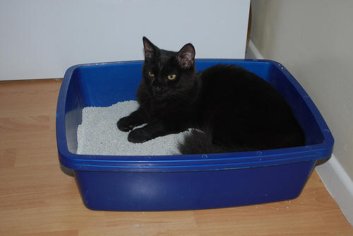 cat-in-litter-box-wolfsavard