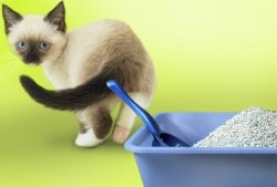 free-dust-cat-litter