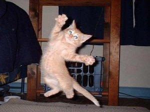 kitten-jumping-in-air