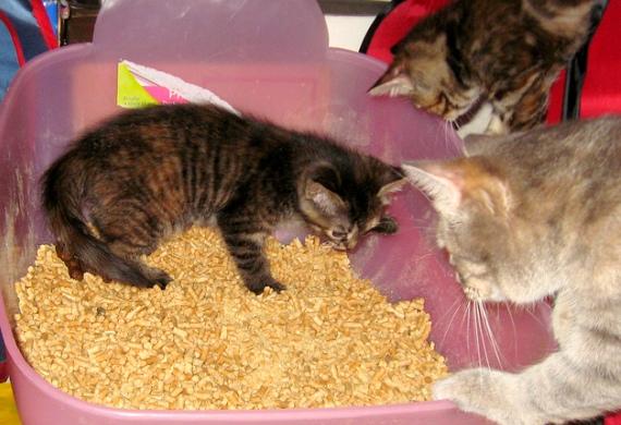 Animeals No Kill Adoption Center Amp Animal Food Bank Page