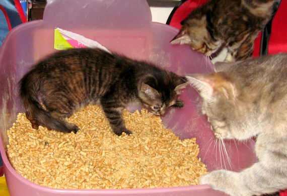 litter_box_cats