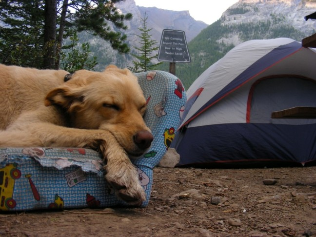 sam-sleepy-camping-1024x768