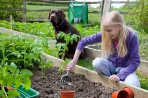 dog-garden