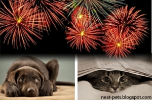 Is Your Cat Or Dog Afraid of Fireworks Or Thunderstorms, pets, pet, dogs, dog,